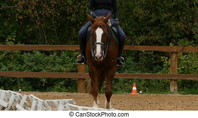 jockey on a horse in the jumping field front view