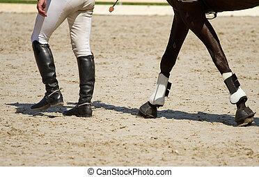 jockey, pferd, beine