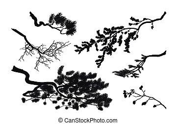 jodła, drzewa., sylwetka, wiśnia, tło., czarnoskóry, sosna, gałęzie, biały, rysunek