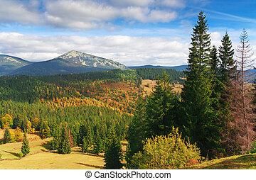 jodła, góry, krajobraz, drzewa