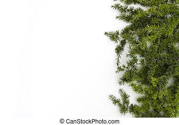 jodła, płaski, dobry, gałęzie, lay., drzewo, przestrzeń, oriented., ozdoba, white., kopia, boże narodzenie