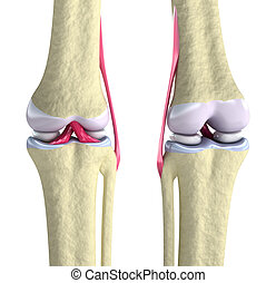 joelho, ligamentos, conjunto
