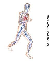 jogger, -, system, vaskulär