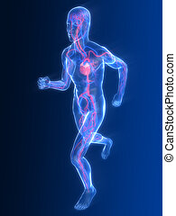 jogger - vascular system - 3d rendered illustratiom of a...