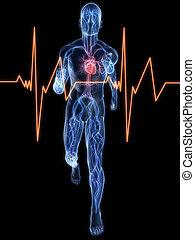 jogger, -, vaskuläres system
