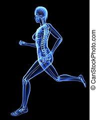 jogger, -, weibliche , röntgenaufnahme