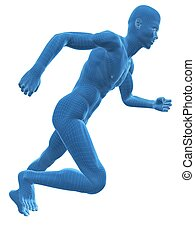 jogger wireframe - 3d rendered anatomy illustration of a...