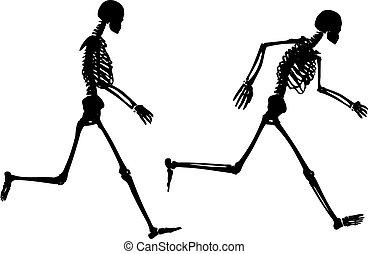 Jogging skeletons - Silhouettes of jogging skeletons