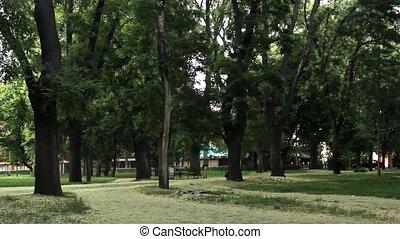 jogging timelapse - jogging in the park