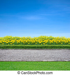 Jogging track and yellow flowers