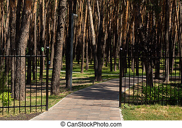 jogging track in a pine park