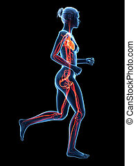 Jogging woman - - medical 3d illustration - jogging woman -...