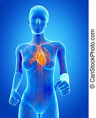 Jogging woman - visible heart