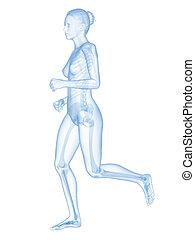 Jogging woman - visible skeleton