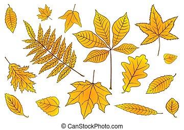 jogo, 10., illustration., folhas, eps, outono, vetorial, white., laranja