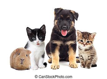 jogo, animais estimação