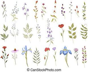 jogo, cobrança, selvagem, flowers., elementos, floral