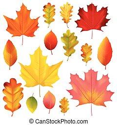 jogo, coloridos, folhas, isolado, outono, vector., branca