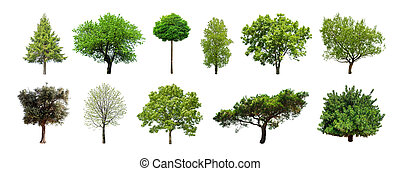 jogo, de, árvores verdes, isolado, branco, fundo