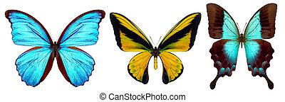 jogo, de, bonito, borboletas, isolado, ligado, um, branca