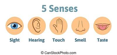 jogo, de, cinco, human, sentidos, icon:, visão, ouvindo, cheiro, toque, taste., olho, orelha, mão, nariz, e, boca, com, tongue., ícones simples, círculos, vetorial, illustration., isolado, ligado, white.