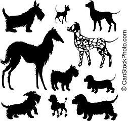 jogo, de, de, cachorros, silhuetas, -, terrier escocês, dalmatian, bassê, poodle, chihuahua., isolado, branco, experiência.