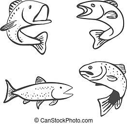 jogo, de, peixe, isolado, branco, fundo, vetorial