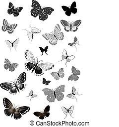 jogo, de, pretas, borboletas