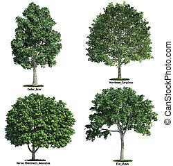 jogo, de, quatro, árvores, isolado, contra, puro, branca