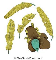 jogo, de, stylized, banana, leaves., decorativo, imagem, com, tropicais, foliage, flores