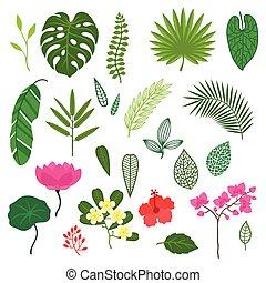 jogo, de, stylized, tropicais, plantas, folhas, e, flowers.