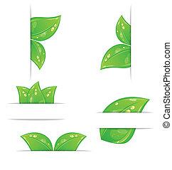 jogo, folhas, etiquetas, -, isolado, ilustração, ecológico, vetorial, experiência verde, branca