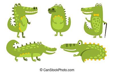 jogo, illustration., vetorial, verde, amarela, barriga, crocodiles., humanized