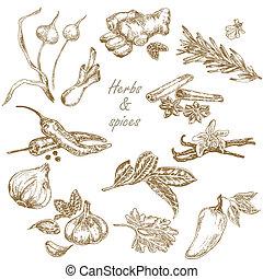 jogo, ilustração, mão, ervas, s, vetorial, desenhado, temperos, cozinha