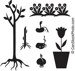 jogo, jardim, seedling