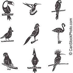 jogo, pássaro preto, ícones