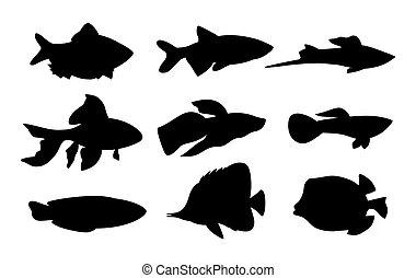 jogo, silueta, peixe, ilustração, vetorial, aquário