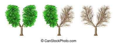 jogo, ter, pulmões, eco, concept., isolado, árvores, experiência., forma, human, branca, seasons., mudança