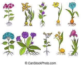 jogo, vindima, -, mão, vetorial, desenhado, flores