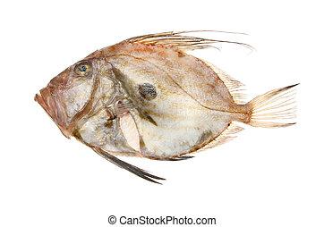 John dory fish - Fresh raw John dory fish isolated against...
