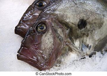 John Dory fish on ice at a French fish markets