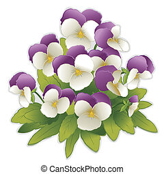 johnny, fiori, su, viola del pensiero, salto