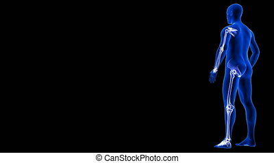 Joint Pain animation from side view. Blue Human Anatomy Body 3D Scan render - rotating seamless loop on black background