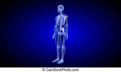 Joint Pain. Blue Human Anatomy Body 3D Scan render - rotating seamless loop