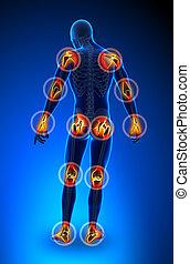 joints, douleur, -, trauma