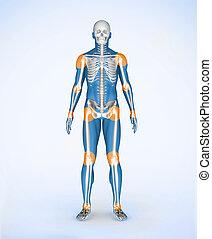Joints of a blue digital skeleton