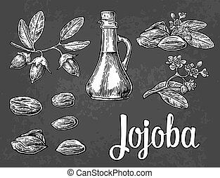 Jojoba fruit with glass jar. Hand drawn vector vintage engraved illustration.