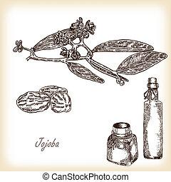 jojoba, rama, con, vidrio, bottles., mano, dibujado, vector, ilustración