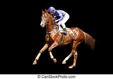 jokey, auf, a, vollblut, pferd, läufe, freigestellt, auf, schwarzer hintergrund
