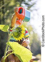 jong kind, watering, een, zonnebloem